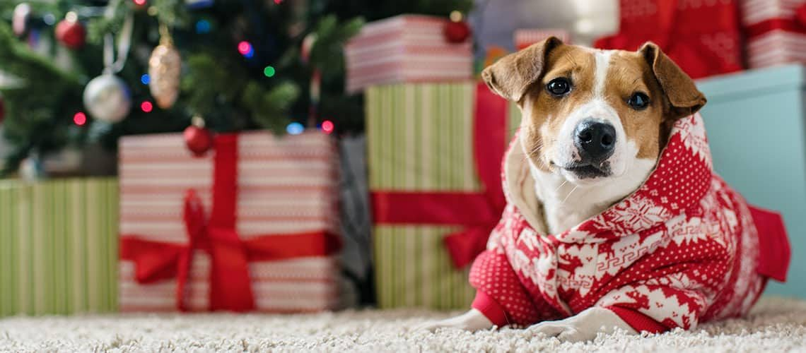 10 unique gift ideas for your dog