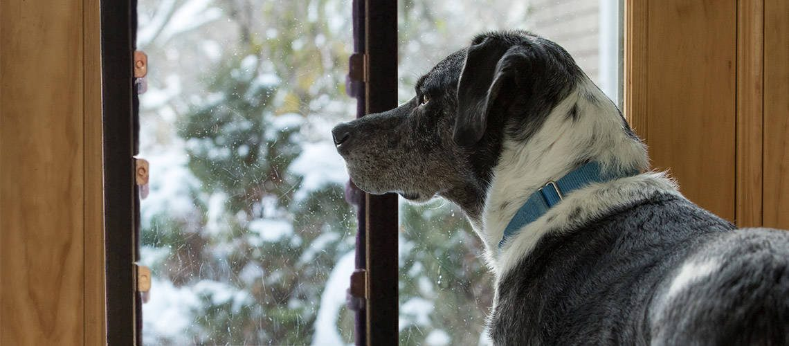 how to winterize your dog door